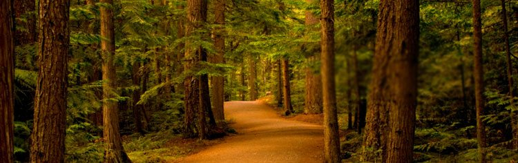 A clear path through a dense forest - All About Prayer Banner